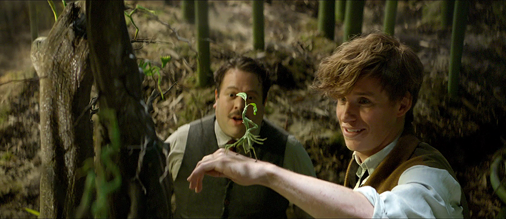 bowtruckle-asticello